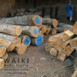 stock kayu jati perhutani jepara,waiki mebel produsen furniture minimalis modern dan ukir klasik Jepara,Aktivitas Pertukangan di Gudang Furniture